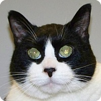 Adopt A Pet :: Abbie - Kalamazoo, MI