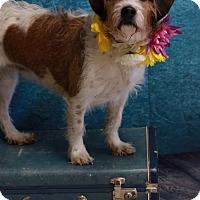 Adopt A Pet :: Dude - Salem, OR
