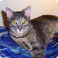 Adopt A Pet :: Charm - Nolensville, TN
