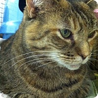 Adopt A Pet :: Dutchess - Trevose, PA