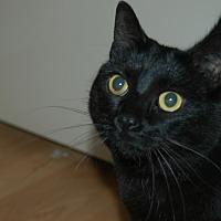 Adopt A Pet :: Susie - San Jose, CA