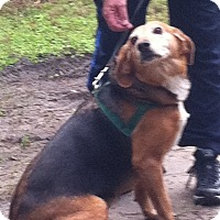 Adopt A Pet :: Layla - Edisto Island, SC