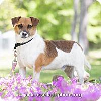 Adopt A Pet :: Oliver - Conyers, GA