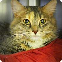 Adopt A Pet :: Elsa - Casa Grande, AZ