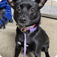 Adopt A Pet :: Molly - Van Wert, OH