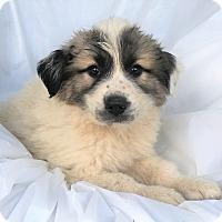 Adopt A Pet :: Balto - Mooresville, NC