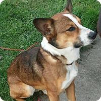 Adopt A Pet :: Doogie - Elyria, OH