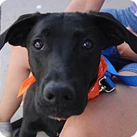 Adopt A Pet :: Prelude - Littleton, CO
