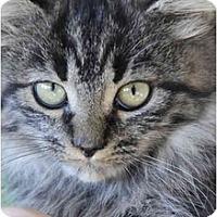 Adopt A Pet :: Peanut - Columbus, OH