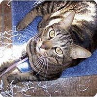 Adopt A Pet :: Purrsy - Davis, CA