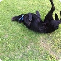 Adopt A Pet :: Truman - Lewisville, IN