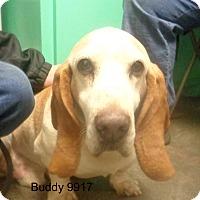 Adopt A Pet :: Buddy - Greencastle, NC