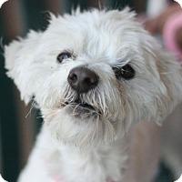 Adopt A Pet :: Snoopy - Canoga Park, CA