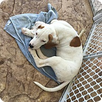 Adopt A Pet :: Lila - mooresville, IN