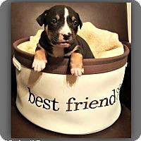 Adopt A Pet :: Ryder - Monroe, NC