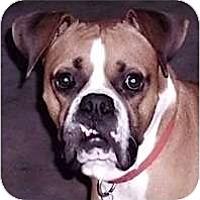 Adopt A Pet :: Chance - Kingwood, TX