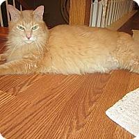 Adopt A Pet :: Tawny - Easley, SC
