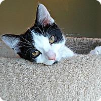 Adopt A Pet :: Stuart - Florence, KY