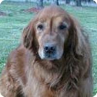 Adopt A Pet :: Chuck - Denver, CO