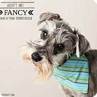 Adopt A Pet :: Fancy - Omaha, NE