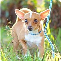 Adopt A Pet :: TUCKER - Corona, CA