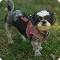 Adopt A Pet :: Josie - Tallahassee, FL