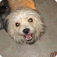Adopt A Pet :: Levi - Commerce City, CO