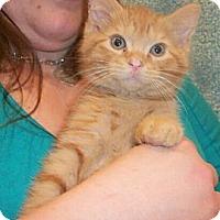 Adopt A Pet :: Saturn - Reston, VA