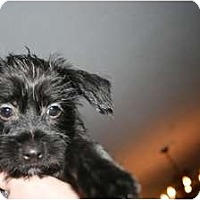 Adopt A Pet :: Jill - Pending - Vancouver, BC
