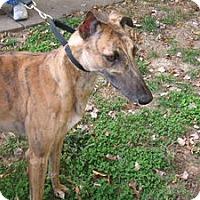 Adopt A Pet :: Pop Pops Cooper - Knoxville, TN