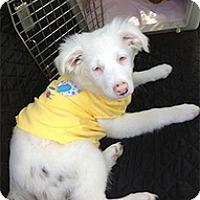 Adopt A Pet :: Elsa - Wilmington, MA