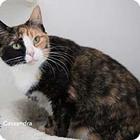 Adopt A Pet :: Cassandra - Merrifield, VA