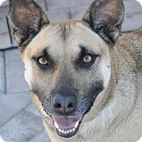 Adopt A Pet :: Tawny - Ormond Beach, FL