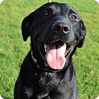 Adopt A Pet :: *Slim Pickens - PENDING - Westport, CT