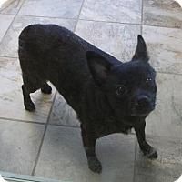 Adopt A Pet :: Khleo - Groton, MA