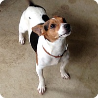 Adopt A Pet :: Speedy - Crystal Lake, IL