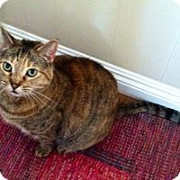 Adopt A Pet :: Susie - Laguna Woods, CA