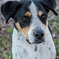 Adopt A Pet :: Roy - Loxahatchee, FL