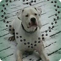 Adopt A Pet :: Duke - Warkworth, ON