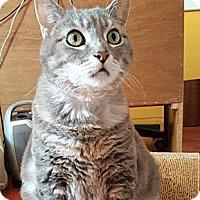 Adopt A Pet :: Marinara - Oakland, CA
