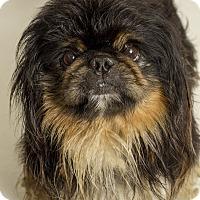 Adopt A Pet :: Boogie - Baton Rouge, LA
