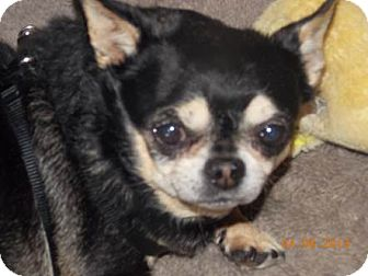 Chihuahua Mix Dog for adoption in San Diego, California - Ruff Ruff