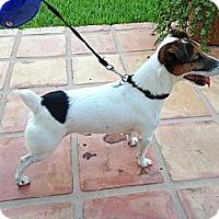 Adopt A Pet :: Dexter - Miami, FL