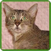 Adopt A Pet :: Esmerelda - Orlando, FL