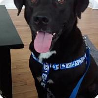 Adopt A Pet :: CHAD - Bardonia, NY