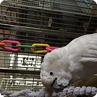 Adopt A Pet :: Buddy - Punta Gorda, FL
