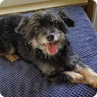 Adopt A Pet :: Clancy - Minneapolis, MN