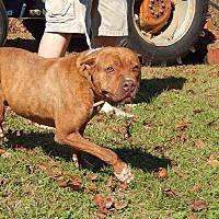 Adopt A Pet :: Rosie - Dawson, GA