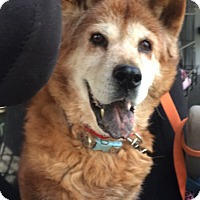Adopt A Pet :: Bianca- 17 years old! - Oak Ridge, NJ
