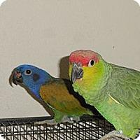 Adopt A Pet :: Romeo & Juliet NeedANew Castel - Vancouver, WA